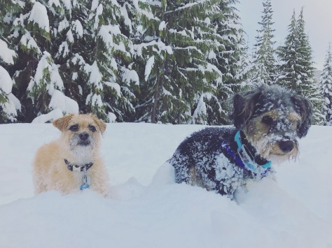 My two pups love joining us on a good snowshoe adventure!